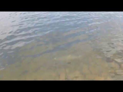 на рыбалку вк толстолобик