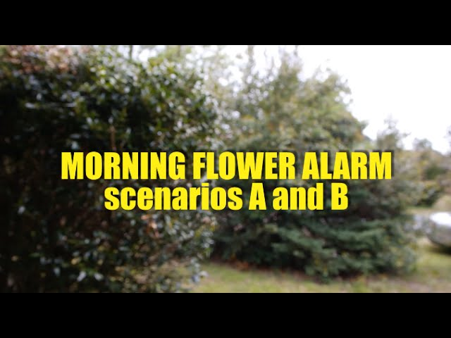 MORNING FLOWER ALARM scenarios A and B