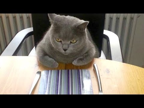 Thumbnail: These amusing ANIMALS will make you LAUGH HARD - Ultimate funny ANIMAL COMPILATION