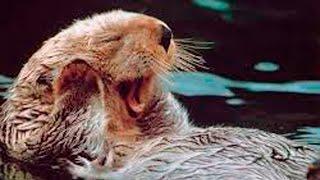 Приколы с животными: смешное видео про животных смотреть на Ютуб!