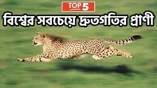 বিশ্বের সবচেয়ে দ্রুতগতির ৫টি পশু | Top 5 Fastest Animals In The World - FactsBD