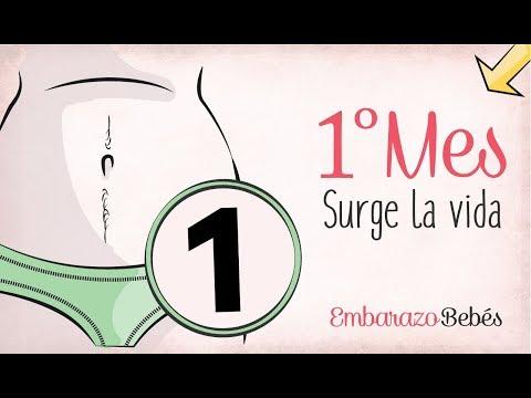 MES 1 | Primer mes de embarazo | Semana a semana