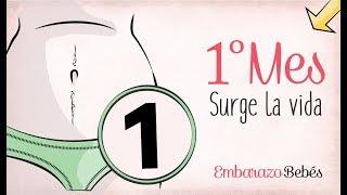 MES 1   Primer mes de #embarazo   Semana a semana