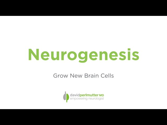 Neurogenesis - Grow New Brain Cells With Exercise