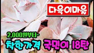 #신비의다육정원-  (…