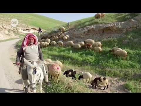 فلسطين: البدو في الضفة الغربية في أزمة كورونا .. خيارين أحلاهما مر  - نشر قبل 9 ساعة