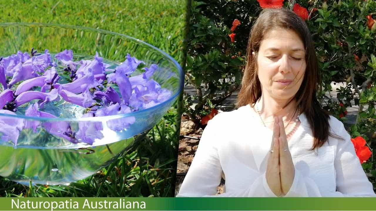 Fiori Jacaranda.Fiori Australiani Preparazione Tintura Madre Jacaranda Essences
