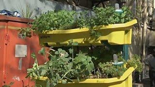 видео Как создать на своем балконе вертикальный огород