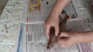 Как почистить окуня как быстро  чистить рыбу от чешуи