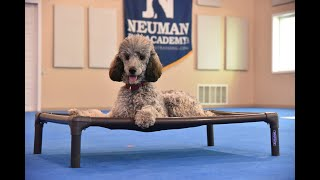 Raina (Standard Poodle) Puppy Camp Dog Training Video Demonstration