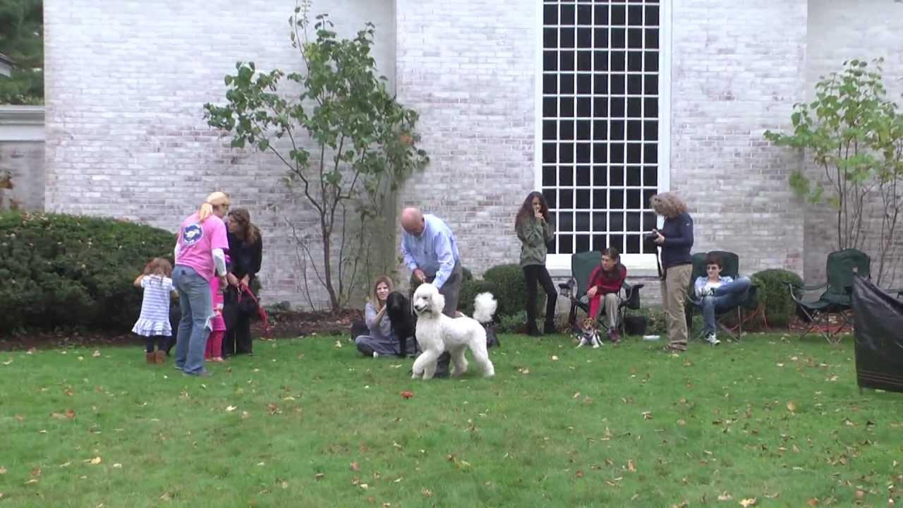 lucky dog fun run most fun luring course youtube