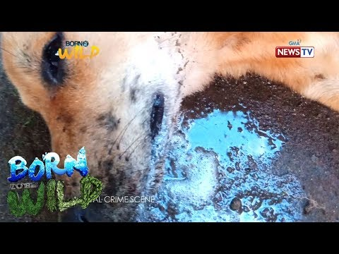 Born to Be Wild: Justice for the dead dogs in Biliran