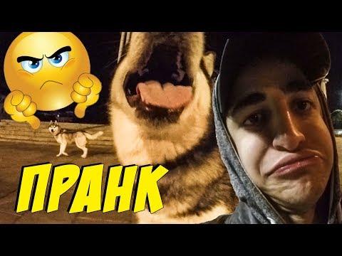 НОЧНОЙ ПРАНК от Армана | хаски и маламут на прогулке