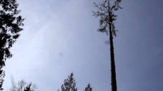 Able Tree Service - Arlington, Washington - 360-403-9532