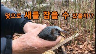 참새잡기/ 참새 덫으로 잡은 겨울철 최고의 별미는??(새 구이?쇠 구이?)