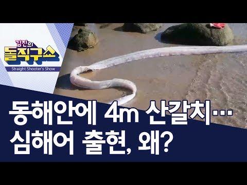 [핫플] 동해안에 4m 산갈치…심해어 출현, 왜? | 김진의 돌직구쇼