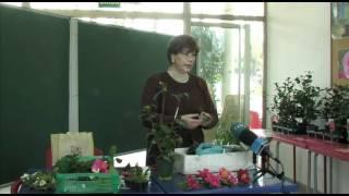 Charla sobre o inxerto no cultivo da camelia. II Exposición da Camelia Rubiáns2