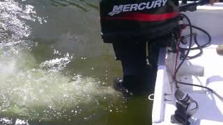 25 hp Mercury Start Up