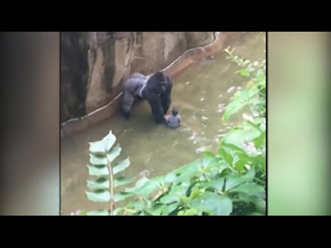 Gorilla killed after handling 4-year-old boy who got into enclosure