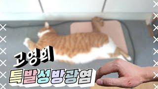모망라토TV_고양이 방광염 | 강집사 고양이 화장실 리…