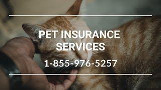 Pet Insurance Ridgefield WA - Best Pet Insurance For Dogs