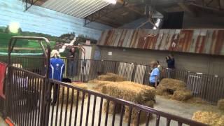 Saga The Schipperke In Novice Barn Hunt