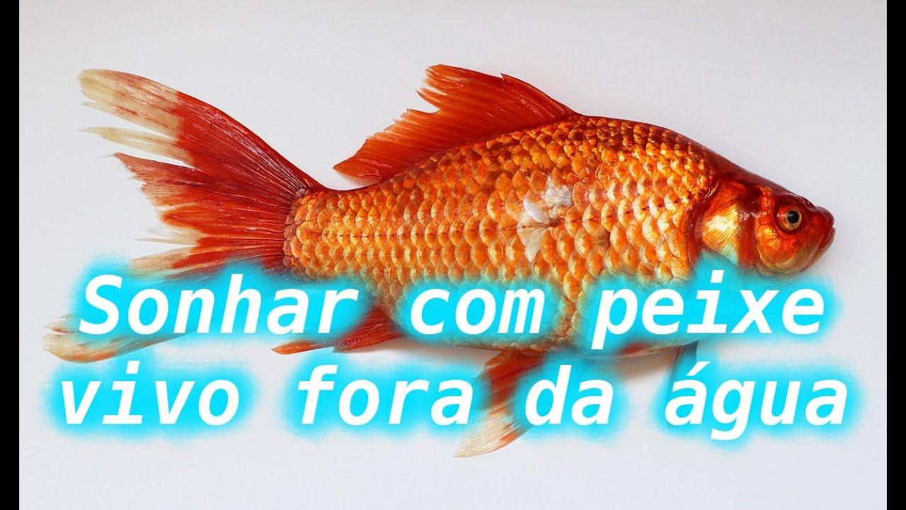 já sonhei com peixe