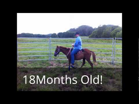 Ella Purnell horses!! help save them