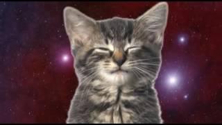 Кошачий хор