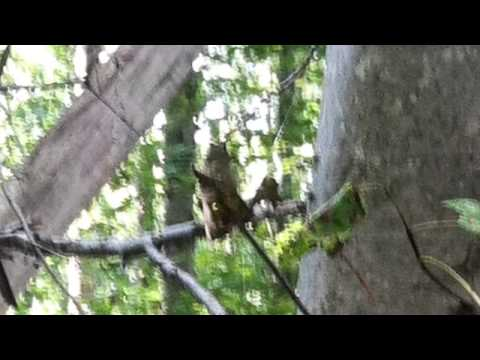 Ghost head captured on cell phone photo Salt Fork State Park Ohio