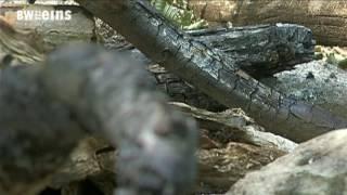 Waldbrandgefahr - Richtiges Verhalten im Wald