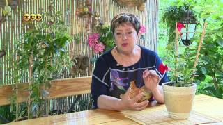 Цветочная лавка - Лианы