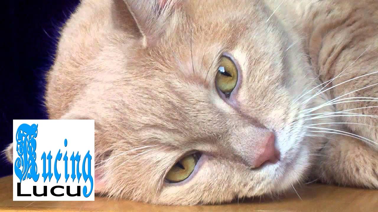 Koleksi Foto Lucu Kucing Berkelahi Kantor Meme