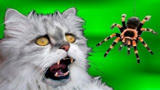 ПРИКОЛЫ СМЕШНОЕ ВИДЕО.Кошка против огромного паука.ждун  желейный медведь не здесь