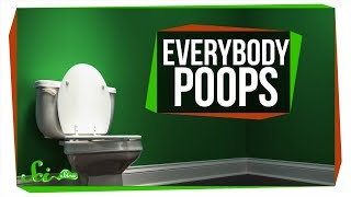 Everything You Ever Wanted to Know About Poop
