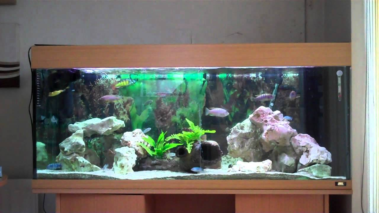Aquarium fish tank wavemaker - Juwel 300 Malawi Cichlid Aquarium With Wave Maker Internal Filters And Both Haps And Mbuna