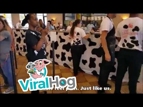 Animal Activists Protest at Chick-fil-A || ViralHog