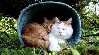 http://kagonekoshiro.blog86.fc2.com/blog-entry-15412.html のせ猫オ...