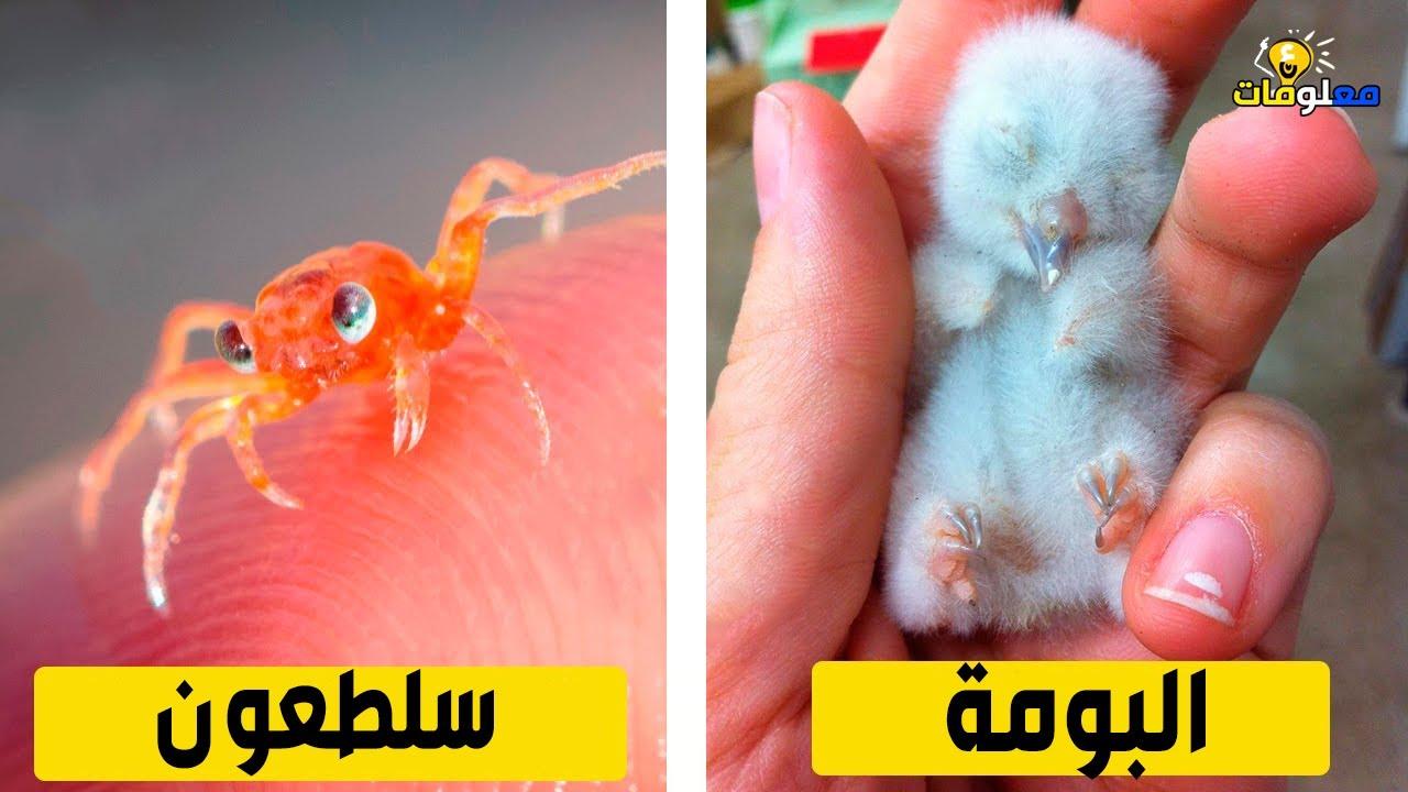 هكذا هو شكل صغير السلطعون | 6 حيوانات حديثة الولادة.. سبحان الله#3