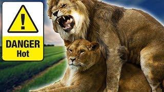 Wild Animals Snake Mating || Australian Animals 2018 || Animals Compilation