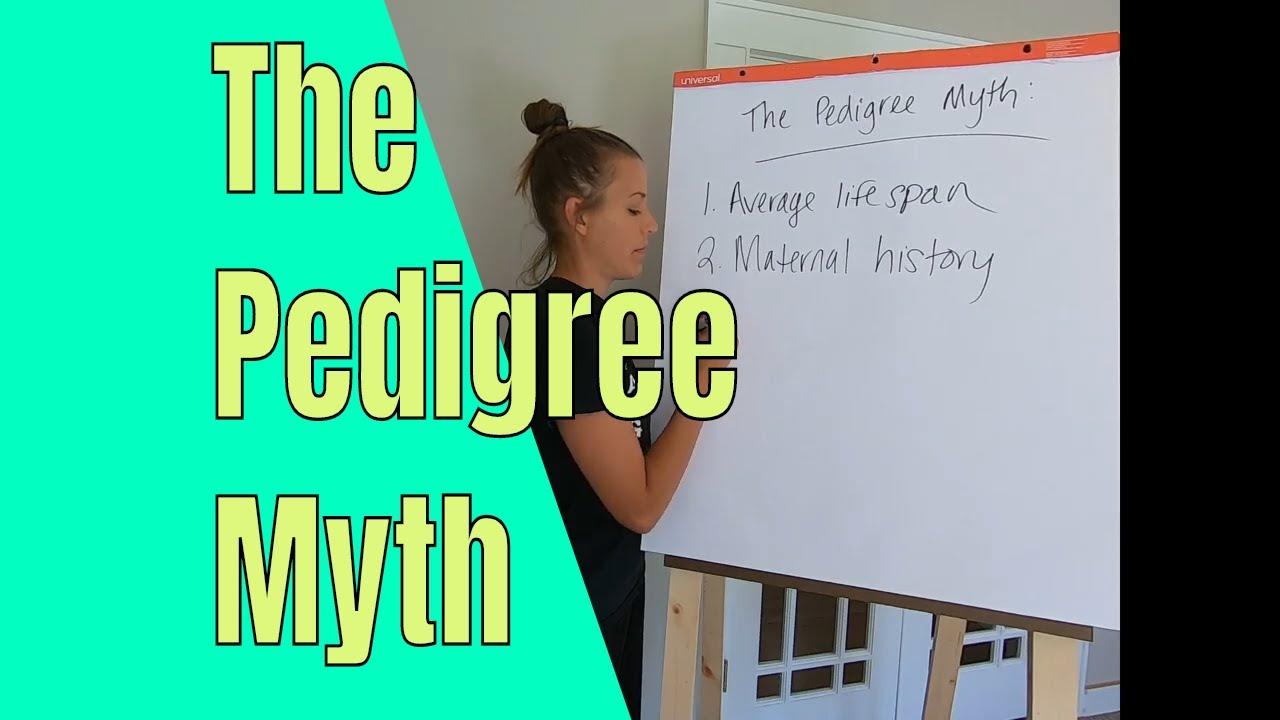 The rabbit pedigree myth