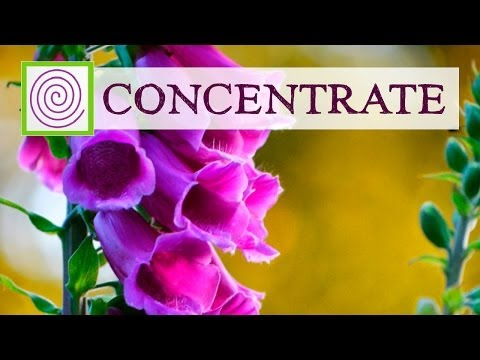 Concentration Music - Music to help your mind focus on tasks at hand.