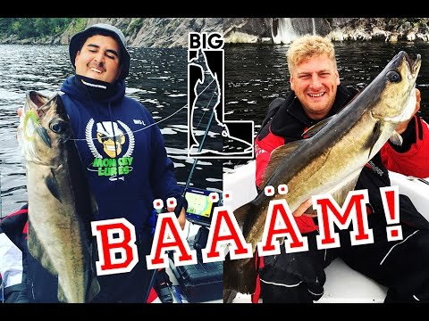 XXL Pollack angeln in NORWEGEN - Meerforellen Makrelen Seehecht Schellfisch