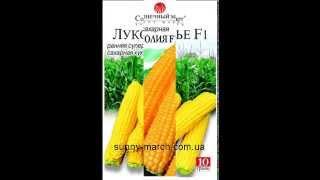 Семена кукурузы оптом(, 2013-05-04T13:10:54.000Z)