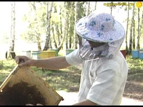 Цветочная пыльца и её польза
