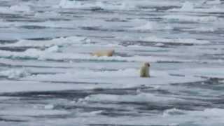 Arctic Circle: Iceland, Norway, Svalbard vacation compilation