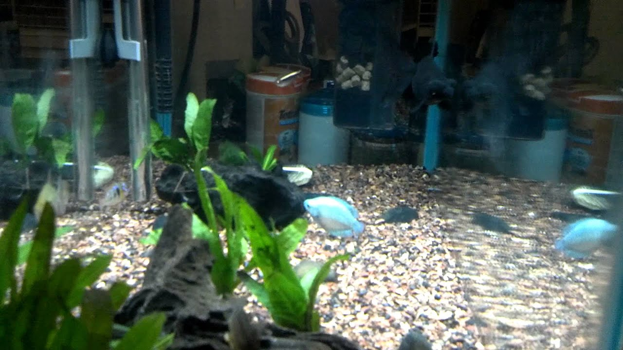 crystal fish aquarium - photo #17