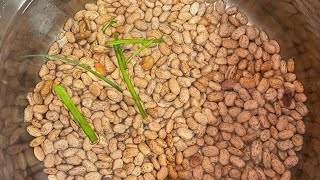 How To Cook/prepare Your Beans For Haitian Rice!