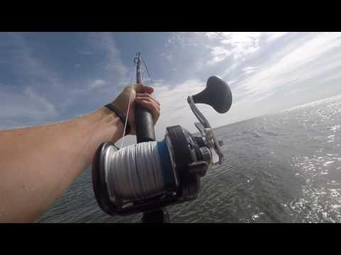 Inshore Fishing Hilton Head South Carolina