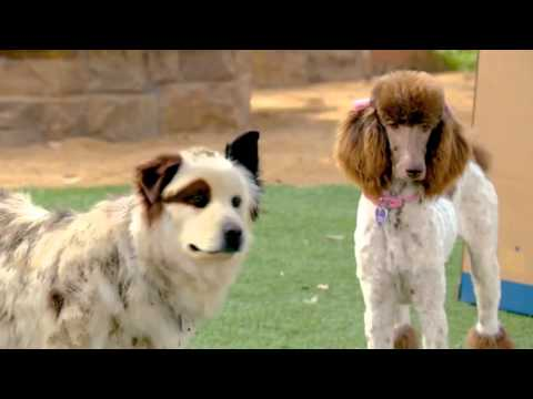 Dog With A Blog - Stan & Princess